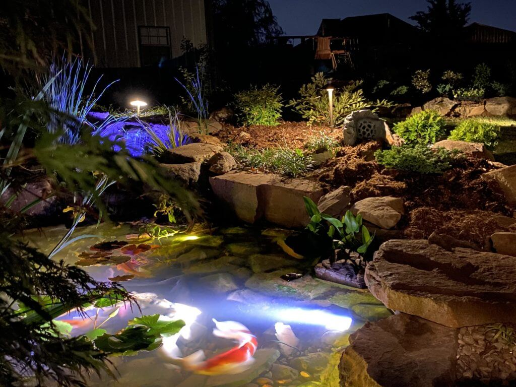 How to maintain a koi pond